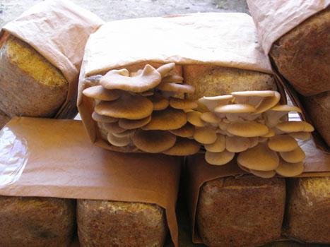 The Mushroom Table - Grow your own