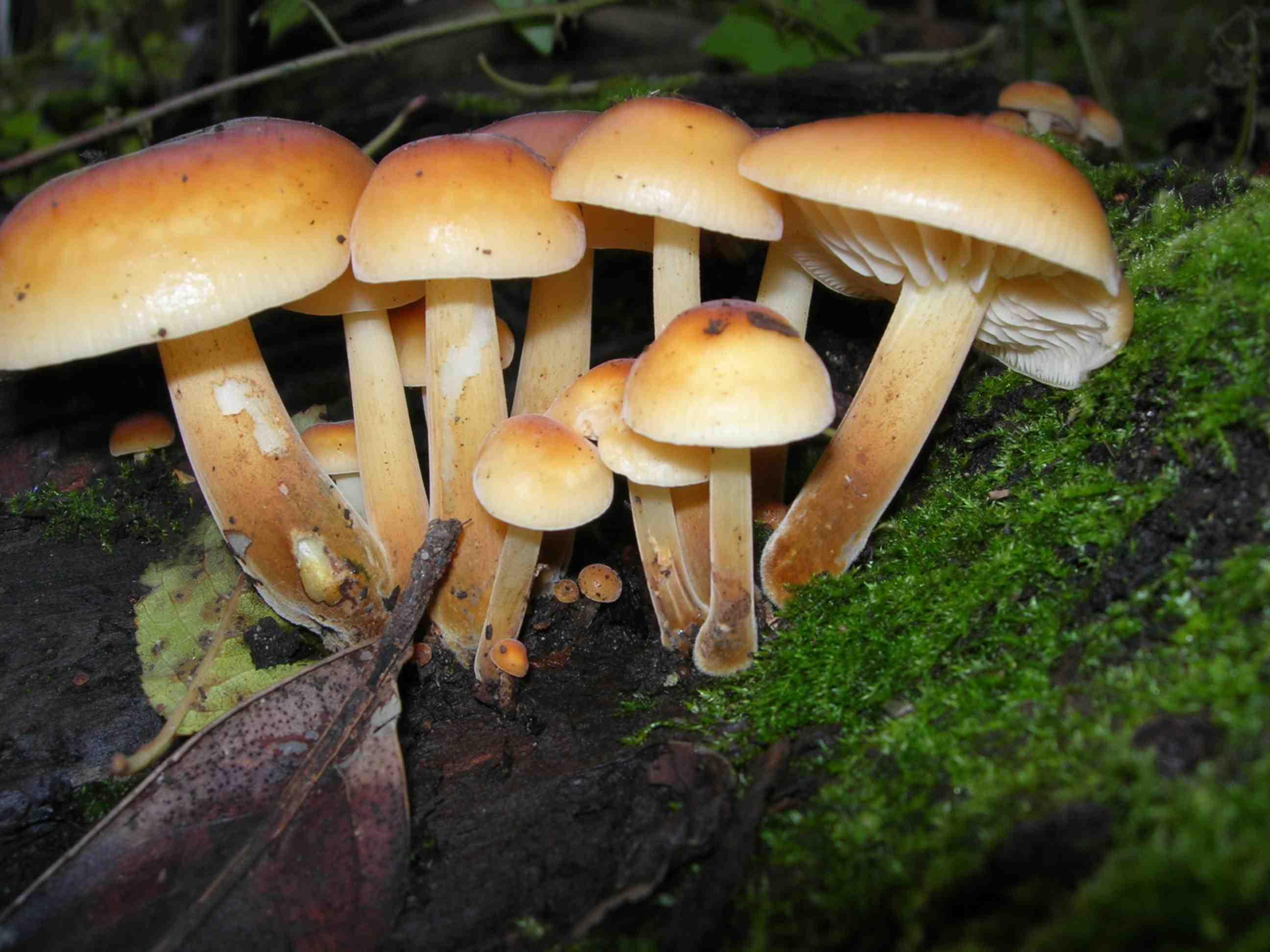 Секс в лесу по грибы 16 фотография